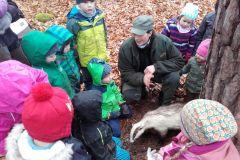 Eine spannende Rundreise und Tiersuche im Wald