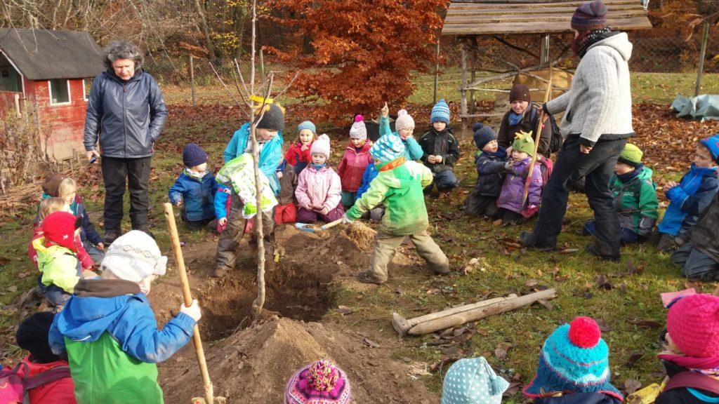 Ein Apfelbaum wird mit vereinten Kräften eingepflanzt