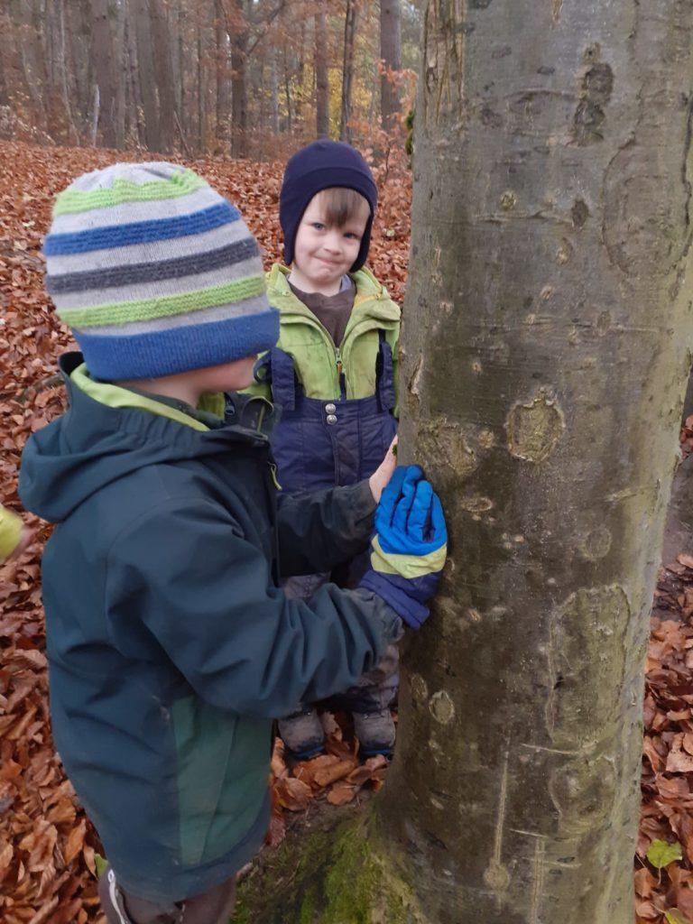 Bäume erstasten